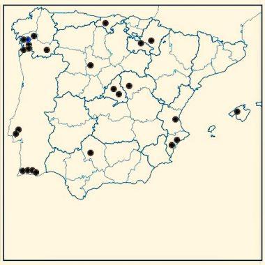 Store Steam: una red de 26 tiendas en España y Portugal